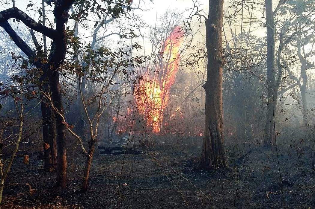 Mysuru: Guard killed in Bandipur blaze