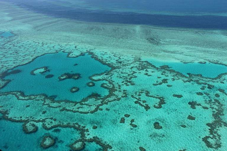 Great Barrier Reef (File AFP)
