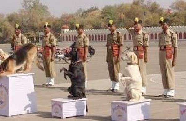 Dog Training School Chennai