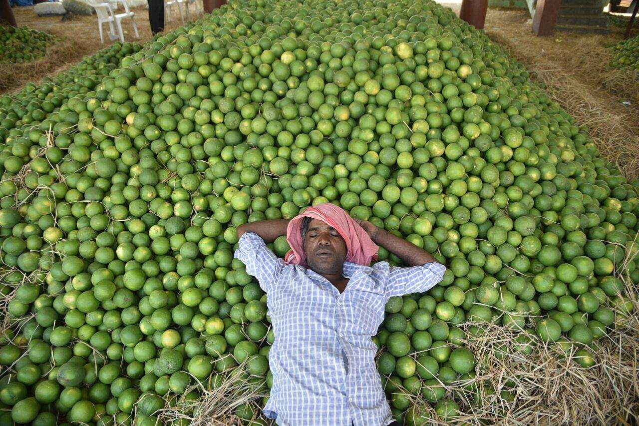 Gaddianaram Market In Hyderabad Gears Up For Sale Of Seasonal Fruits The New Indian Express