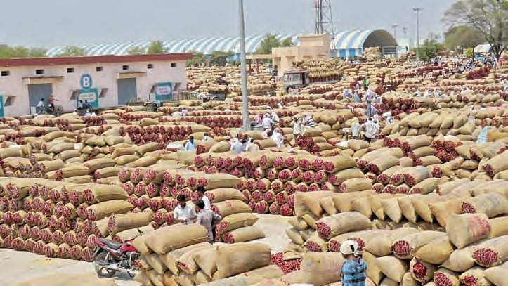 Centre comes to rescue of distressed chilli farmers in Andhra