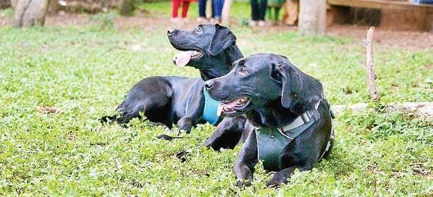 Residente recibe notificación de desalojo para pasear perros en la zona común - The New Indian Express 1