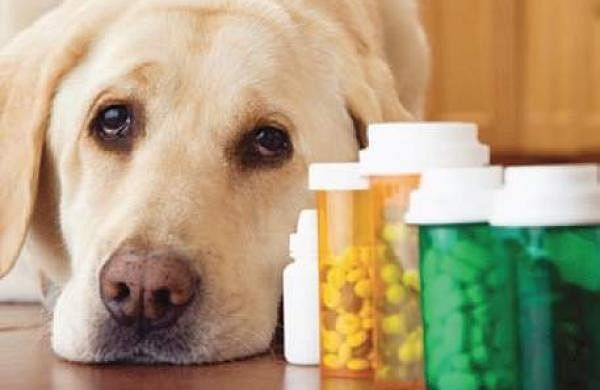 how to get dogs to take tablets