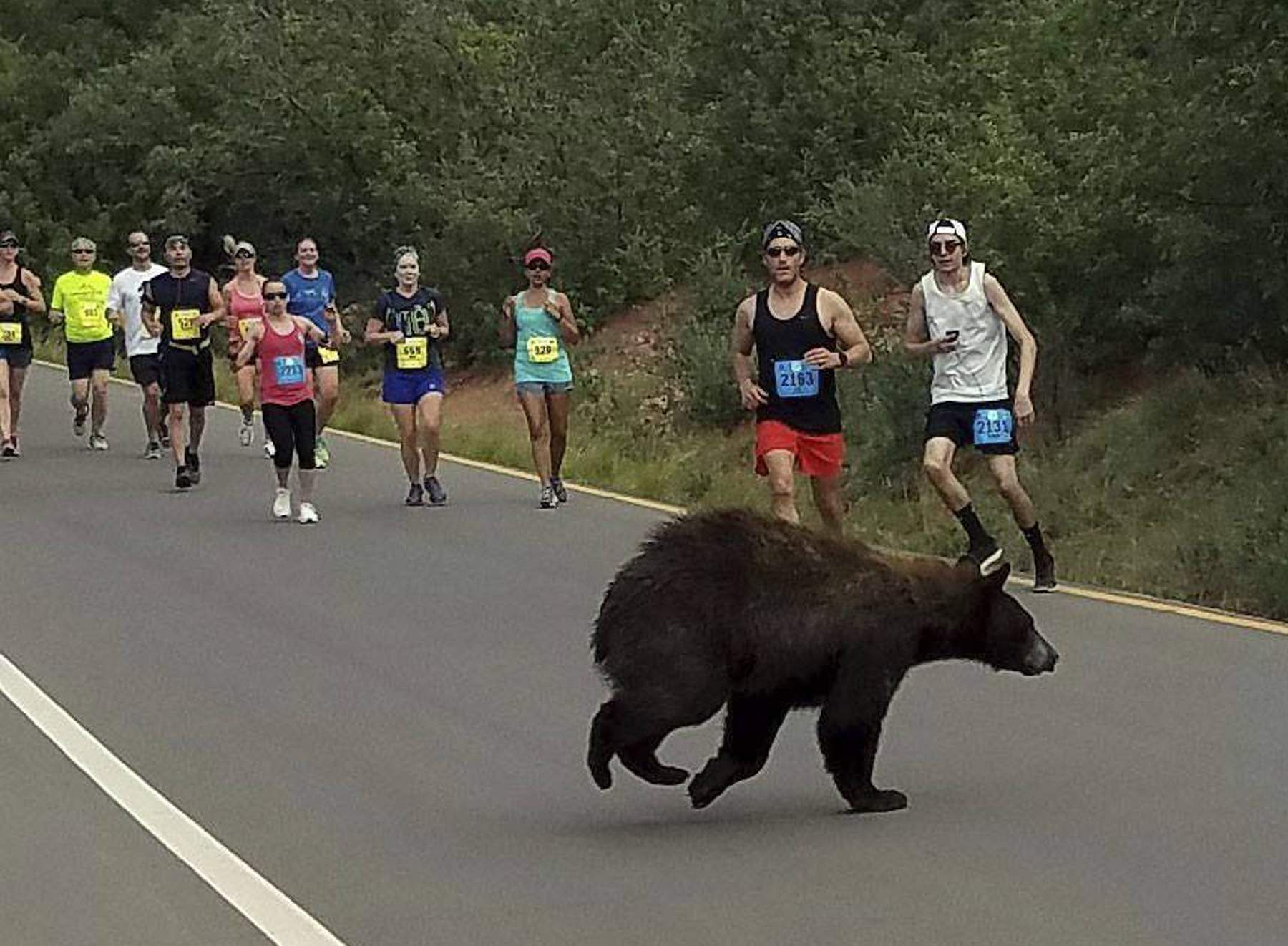 Bear crosses through Garden of the Gods 10 Mile Run