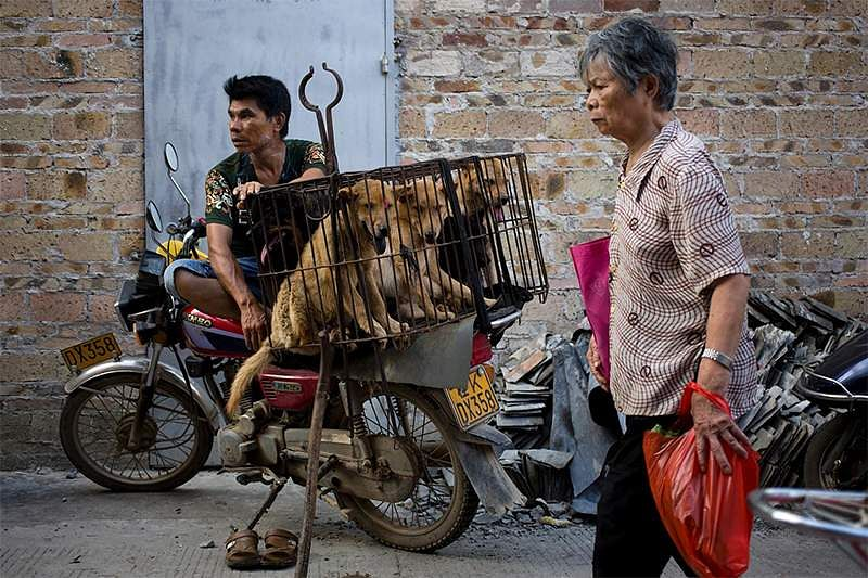 Image result for China's dog meat festival opens despite ban rumours,