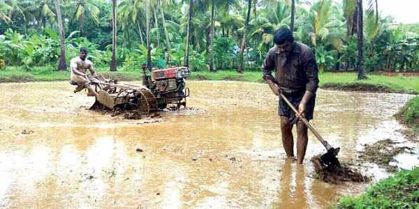 Farmers engaged at Puzhambram where paddy is cultivated as part of Ponnaryan Koyyunna Ponnani   Express Photo Service