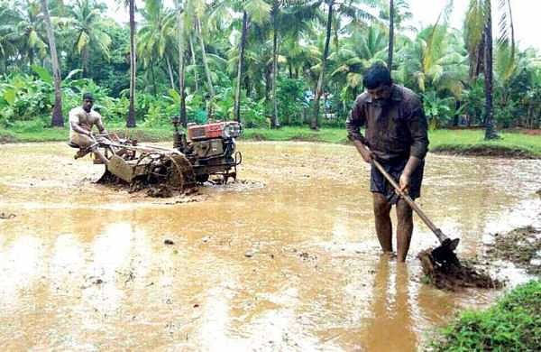 Farmers engaged at Puzhambram where paddy is cultivated as part of Ponnaryan Koyyunna Ponnani | Express Photo Service