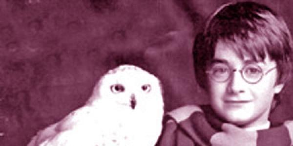 Daniel Radcliffe in Harry Potter (File photo)
