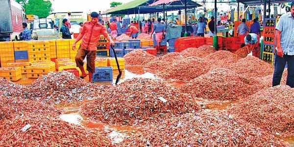 Project to revive native shrimp- The New Indian Express