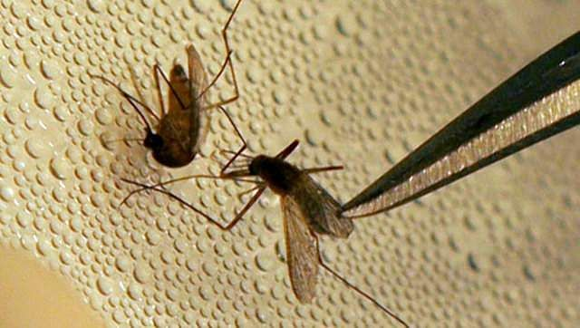 Tamil Nadu reports first case of Zika virus