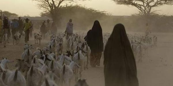 Somali refugees lead their herds of goats home for the night, inside Dagahaley Camp, outside Dadaab, in Kenya. A Kenyan court on Thursday, Feb. 9, 2017 declared illegal a government order to close the world's largest refugee camp and send more than 200,00