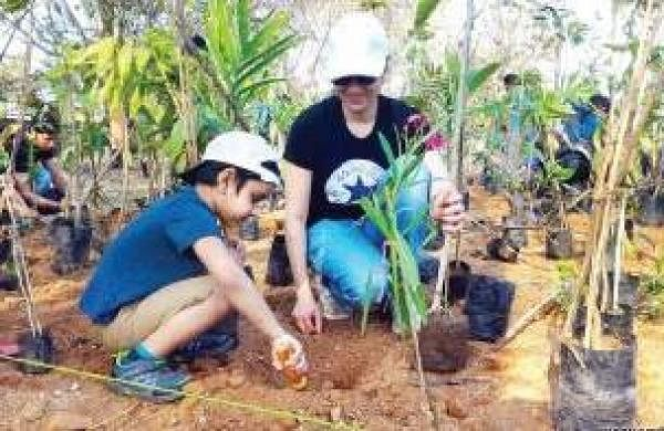 how the plantation affect biodiversity How these non-oil plantations affect biodiversity remains a critical yet understudied question the rates of plantation development and regulations regarding land conversion are.