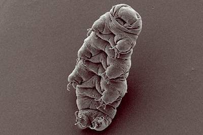 Earth's last survivor: The eight-legged water bear