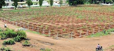 Saplings planted at the Markfed vacant land | Express photo
