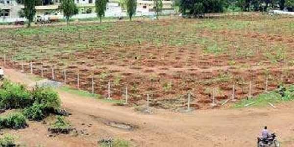 Saplings planted at the Markfed vacant land | Express photo