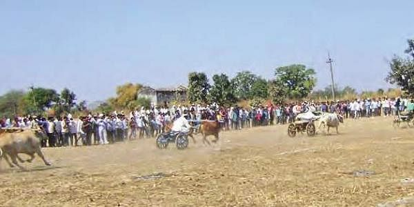 Bullock cart race being held at Nagoba Jatara in Adilabad district on Sunday after a gap of 30 years. (File photo)
