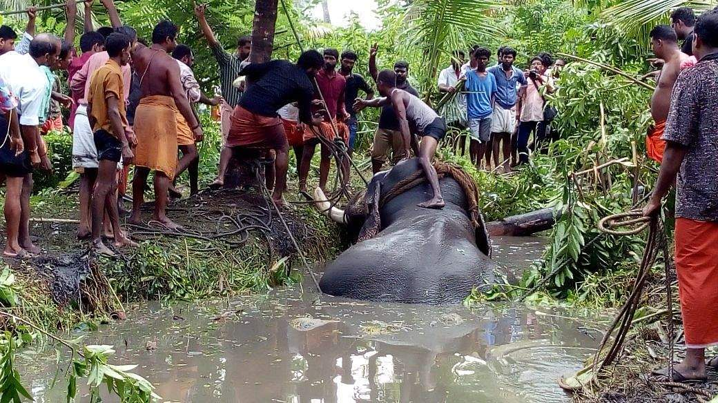 Bala saved! Escapee elephant rescued from mire after 18 ...