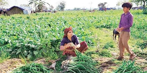 Government mulls organic farming policy to boost