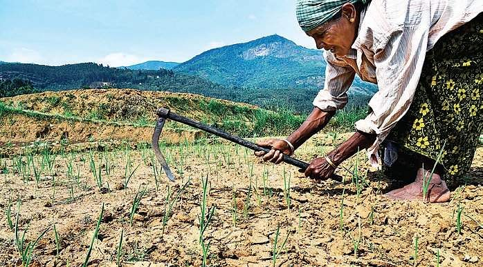 Economists to PM: Shift to models that boost farmers' income