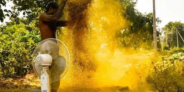 Rasagola awaits as GI tag for Kandhamal turmeric filed- The