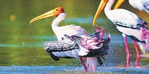 11 Karnataka rivers chosen for development of inland