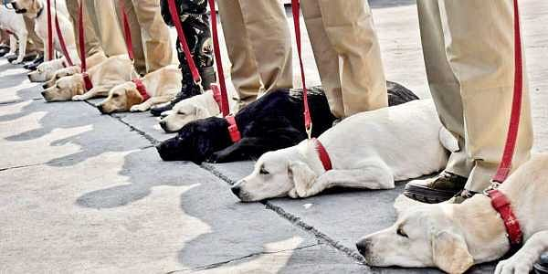 71 Canines Join The Police Force In Hyderabad The New Indian Express