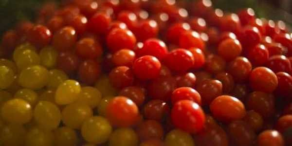 """In this Thursday, Jan. 4, 2018 photo, small yellow and red 'drop tomatoes' are spawning new recipes at a restaurant in Tel Aviv, Israel. The """"drop tomato"""" is about the size of a blueberry and Israel's Kedma company in the southern Arava desert says it is the smallest one ever developed in Israel, perhaps even in the world. (Photo: AP)"""