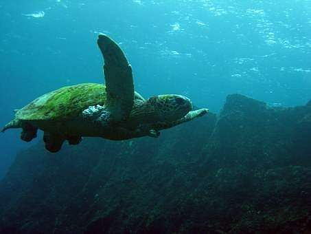 Rising Temperatures Are Turning 99% Of These Sea Turtles Into Females