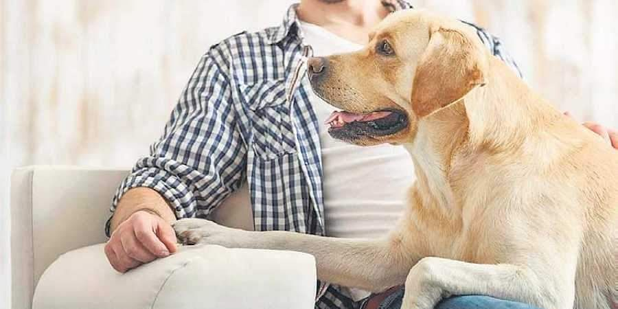Your dog may not be as intelligent as you think