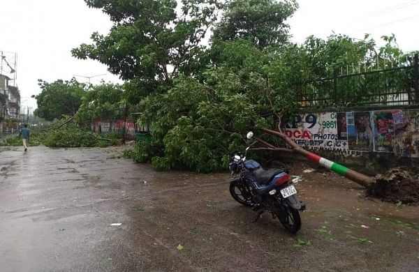 An uprooted tree after Cyclone Titli made a landfall in Odisha's Berhampur district. (Photo | Biswanath Swain/EPS)