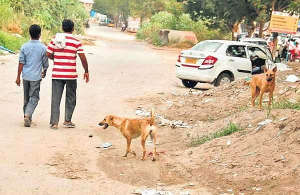 Street dogs often attack people who come to parks for morning and evening walks | Sathya Keerthi