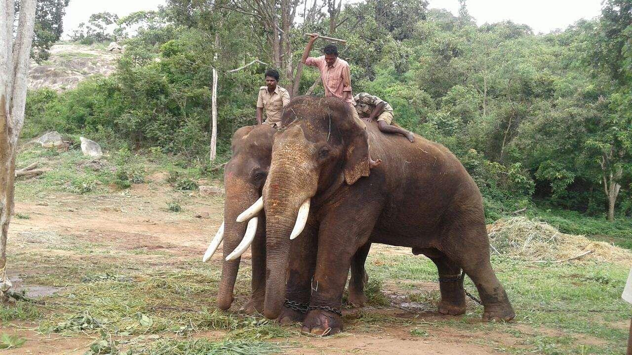 Karnataka-elephant-death
