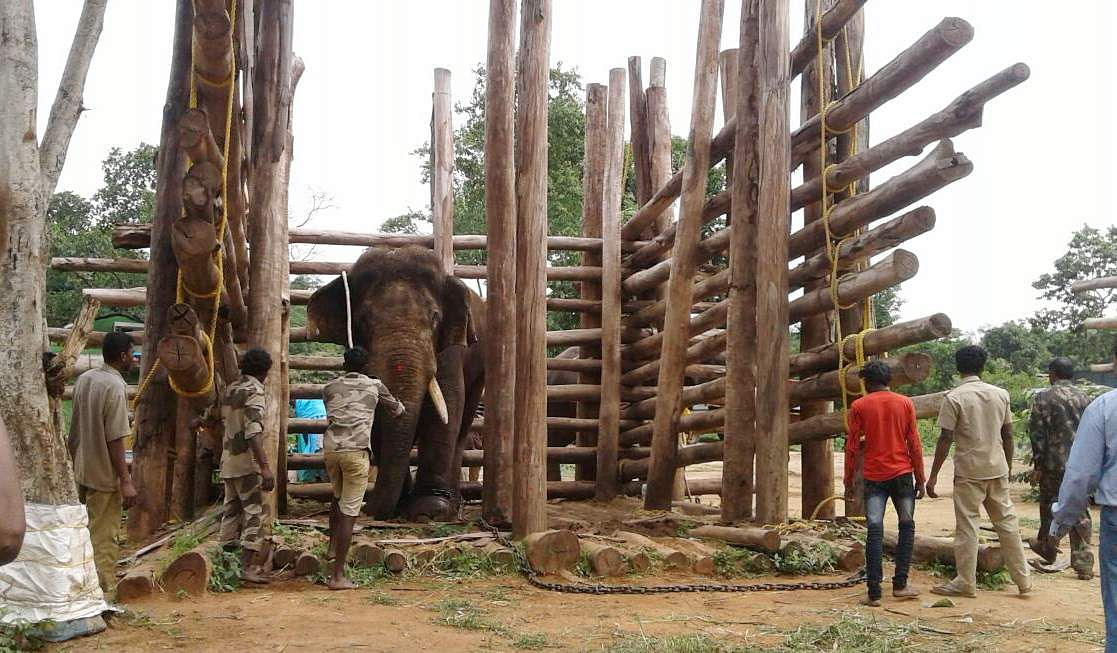 Karnataka-elephant-Ranga