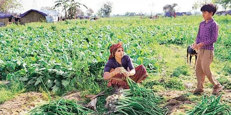Organic farming