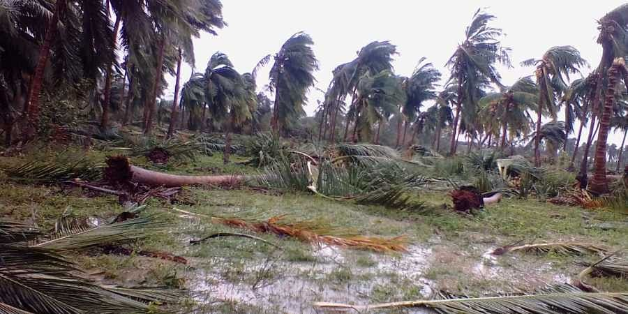Cyclone Gaja: Death toll 35 as storm takes down more than