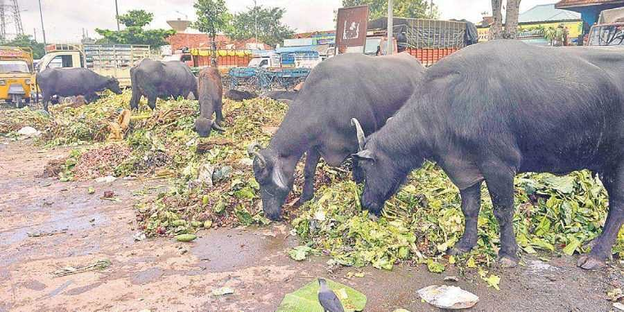 Traders worried as customers keep off 'unhygienic' Koyambedu market