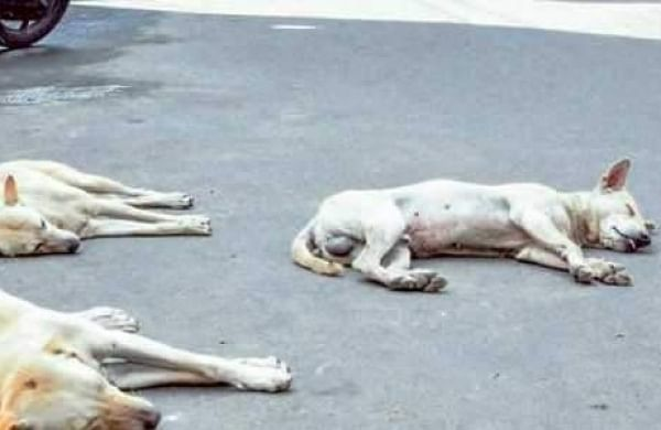 File image of stray dogs for representational purpose | EPS