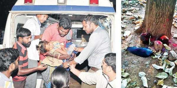 A young devotee being taken to hospital on Friday after she took ill on eating prasadam at Kichugatti Maramma Temple in Chamarajanagar district.(Right) A dead crow in front of the temple   Udayshankar S