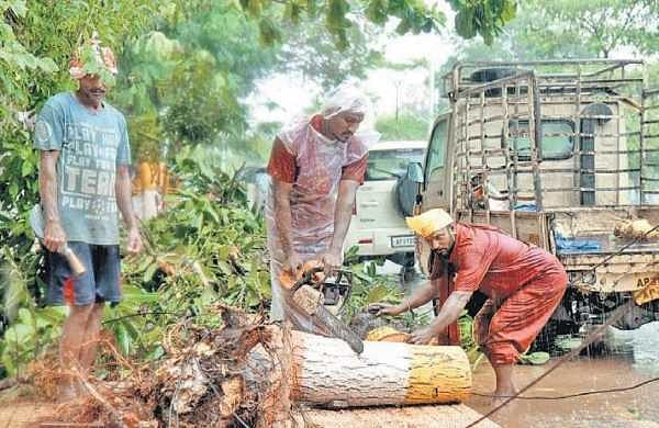 GVMC staff clearing branches of a fallen tree near MVP colony in Vizag on Monday