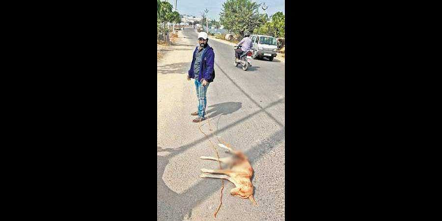 A stray dog succumbed to injuries on Wednesday after a GHMC worker dragged it by a rope down the road for half a kilometre in LB Nagar. (Photo | EPS)