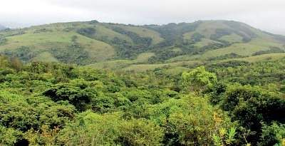 India's forest cowl will increase by 1 per cent
