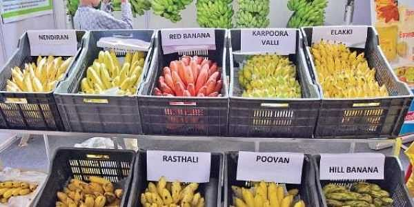 The many varieties will make you go bananas.   B P Deepu
