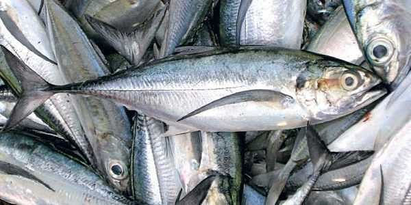 Kerala's seafood export companies get that sinking feeling- The New