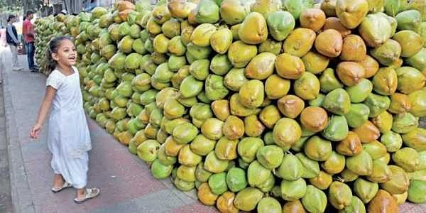 Finding quality tender coconuts? Visit these Karnataka