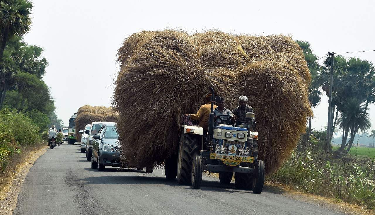 Vijayawada,AP:Tractor carrying paddy grass double the size of it bloakcing the view of rare vehicles causing traffic distrubance on the outskirts of Vijayawada on Friday.Express photo by R V K Rao.