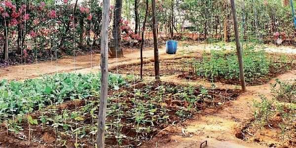 Smart Kitchen Garden to promote organic farming in Kerala ...