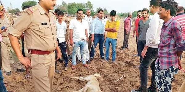 Dogs maul girl to death in Sitapur; 7th such incident in May