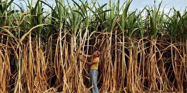 Sugar mills to get finance support