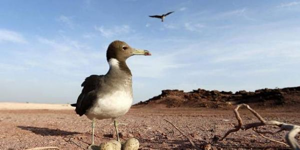 Rare 3D fossil reveals first bird beaks had teeth