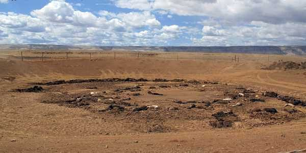 Almost 200 horses found dead on Navajo land in drought-hit Arizona